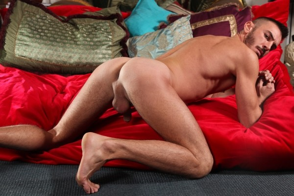 Well Hung And Hairy DOWNLOAD - Gallery - 013