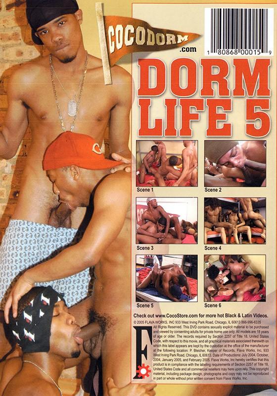 Dorm Life 5 DVD - Back