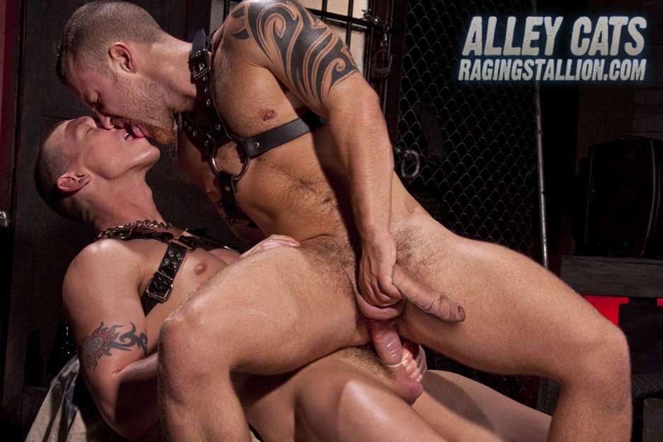 Alley Cats DVD - Gallery - 007